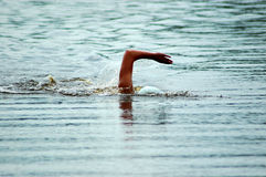 Swimmer. A white arm of a caucasian swimmer athlete swimming in the lake Royalty Free Stock Photo