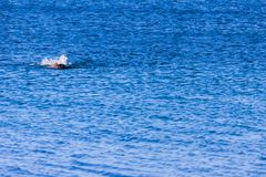 Swimmer in the blue aegean turkish sea Royalty Free Stock Photography