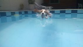 Swimmer dog Stock Images