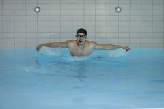 Swimmer Doing Butterfly Stroke Royalty Free Stock Image