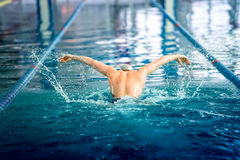 Swimmer performing the butterfly stroke at indoor swimming competition. Male swimmer performing the butterfly stroke at indoor swimming competition Royalty Free Stock Photos