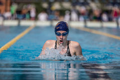 A swimmer. A player of swimming in a round of the national trophy Italian memorial Mirko Lagana Royalty Free Stock Images