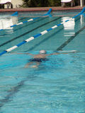 Swimmer in pool. Rear view of swimmer performing butterfly stroke in pool Stock Image