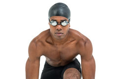 Swimmer ready to dive. On white background Stock Image