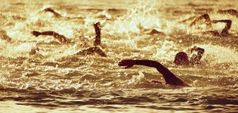 The swimmer`s silhouette. During the early racing in swimming Royalty Free Stock Photography