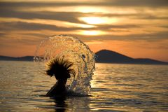 Swimmer splashing at sunset Stock Images