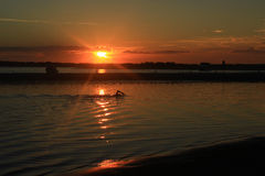 Swimmer and sunrise Royalty Free Stock Images