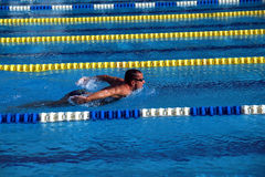 Swimmer in the swimming pool Stock Image