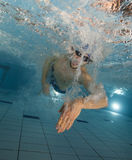 Swimmer at the swimming pool. Stock Image