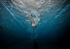 Swimmer at the swimming pool. Male swimmer at the swimming pool. Underwater photo Stock Photography