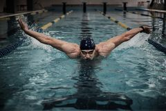 Swimmer in swimming pool Royalty Free Stock Image