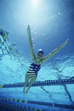 Swimmer Wearing U.S Swimsuit In Pool Stock Photography