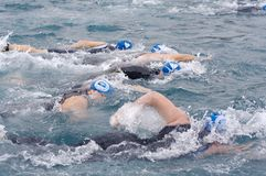 Swimmers. At the Catalina, CA Triathlon on Nov 7, 2009 Stock Photo