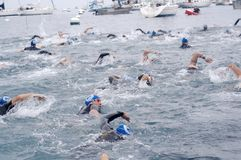 Swimmers. At the Catalina, CA Triathlon on Nov 7, 2009 Royalty Free Stock Image