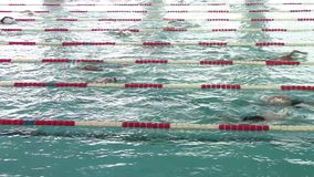 Swimmers competing. Olympic indoors swimming pool with swimmers competing on different lanes stock video