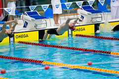 Swimmers starting to the competition Royalty Free Stock Image