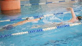 Swimmers swim free style, front crawl or forward crawl stroke in a swimming pool for competition or race. Competition