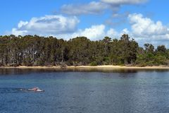 Swimmers exercising in open water background royalty free stock photography