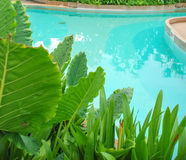 Swimmimg pool. In resort at BAngkok, thailand stock photos