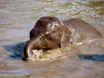 Swimming Baby elephant Stock Images
