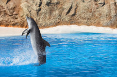 Swimming Backwards. Dolphin doing backwards swimming trick Stock Photos