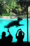 Swimming Bear Stock Photos