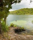 Swimming in Blue Lake Stradbroke Island Stock Photography