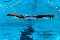 Swimming Butterfly African Royalty Free Stock Photos