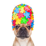 Swimming cap dog Royalty Free Stock Photos
