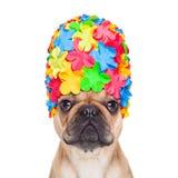 Swimming cap dog Royalty Free Stock Photos