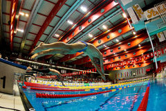 Swimming Championship 2009 Royalty Free Stock Photo