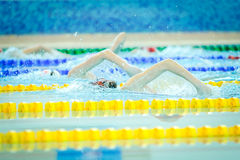 Swimming championship Stock Images