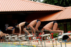 Swimming competition. Help at the sport center royalty free stock photography