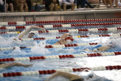 Swimming Competition Stock Images