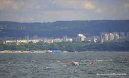 Swimming competition,Varna city Royalty Free Stock Photos