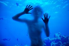 Swimming with corals Stock Image
