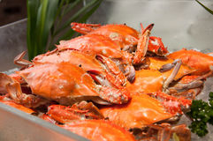 Swimming crab Stock Photography