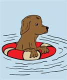 Swimming dog. Illustration of a dog Stock Images