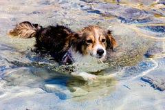 Swimming dog Stock Image