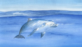 Swimming dolphin artwork. Dolphin swimming in the ocean. Hand painted watercolor Royalty Free Stock Image