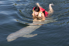 Swimming with dolphin. Female teenager swim with fish royalty free stock photos