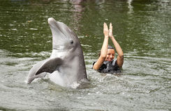 Swimming with dolphin Stock Images