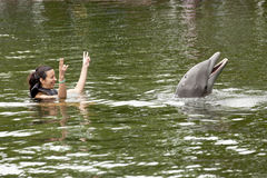 Swimming with dolphin Stock Photos