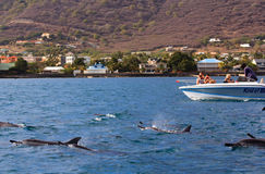 Swimming with dolphins. Is a famous program which will bring visitor into contact with  beautiful scenery, unspoiled landscapes and wonderful animals, Mauritius Stock Photo