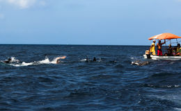 Swimming with dolphins Royalty Free Stock Images