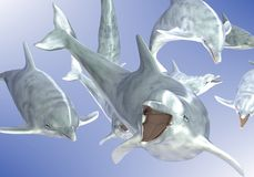 Swimming dolphins. 3d illustration of group of swimming dolphins in blue sea stock illustration