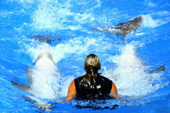 Swimming with dolphins. Two dolphins play with girl Stock Image