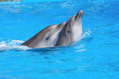 Swimming dolphins stock photo