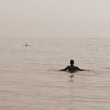 Swimming with Dolphins Stock Photography