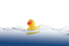 Swimming Duckling Royalty Free Stock Photos